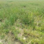 land with c of om and registered survey 1