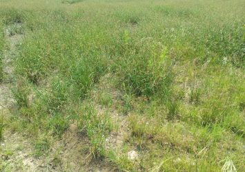land with c of om and registered survey 18