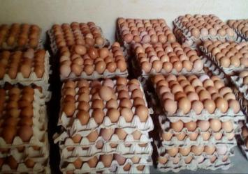 Eggs for sale at affordable prices big size 4