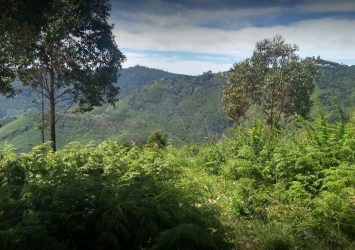 DTCP approved Residential Plots for sale at Kodaikanal 6