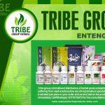 Tribe Group Men's Herbal Remedies International Call +27710732372 Oman 1