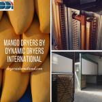 Mango Dryers 3