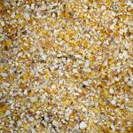 Grind Yellow Maize for sale whatsapp +27631521991 5