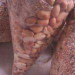 sesame seed seller/sesame seed exporter 2
