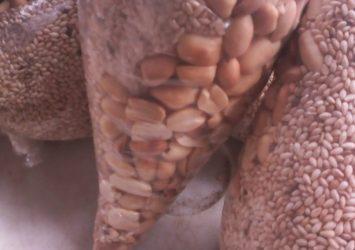 sesame seed seller/sesame seed exporter 1