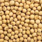 soybeans seller/soybeans seller/soya beean seller. 2